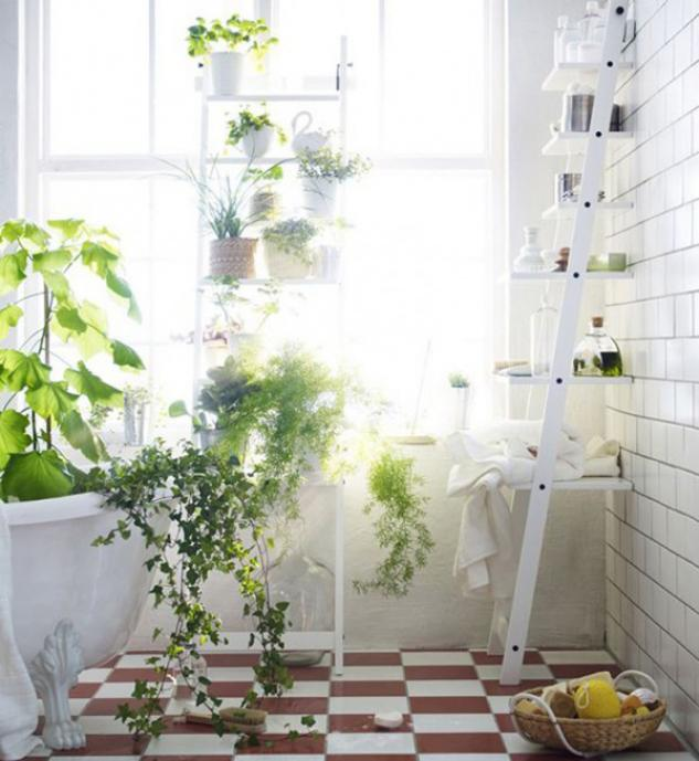 Plants Could Bring A Spark Of Life And Also Shade To Your Apartment, Even  If Your Apartment Is Uninteresting And Little.