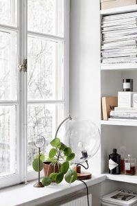 Indoor Plants In The Window Ideas