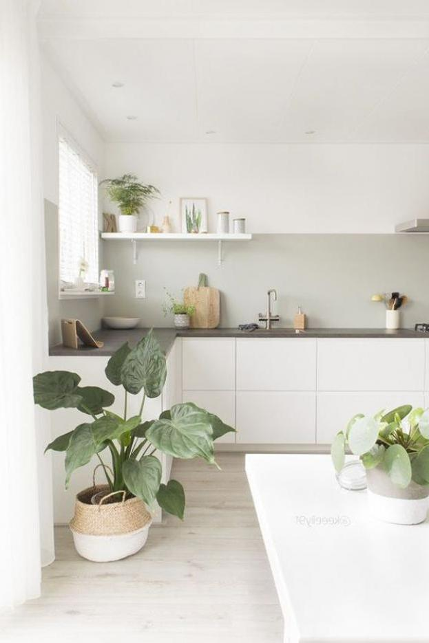 Tropical Kitchen Ideas: 15 Fresh Natural Kitchen With Tropical Plants